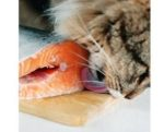 Cat-enjoys-fish-flavor-nutrition-1411PETfish.jpg