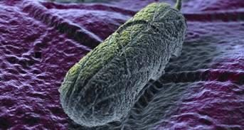 A computer rendering of salmonella