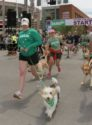 IAMS-flying-fur-run-1406PETnews