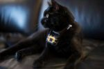 cat-collar-camera-1311PETnaturesrecipe.jpg