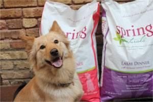 dog-food-1203PETspringnaturals.jpg