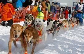 Tim Hunt Iditarod 1