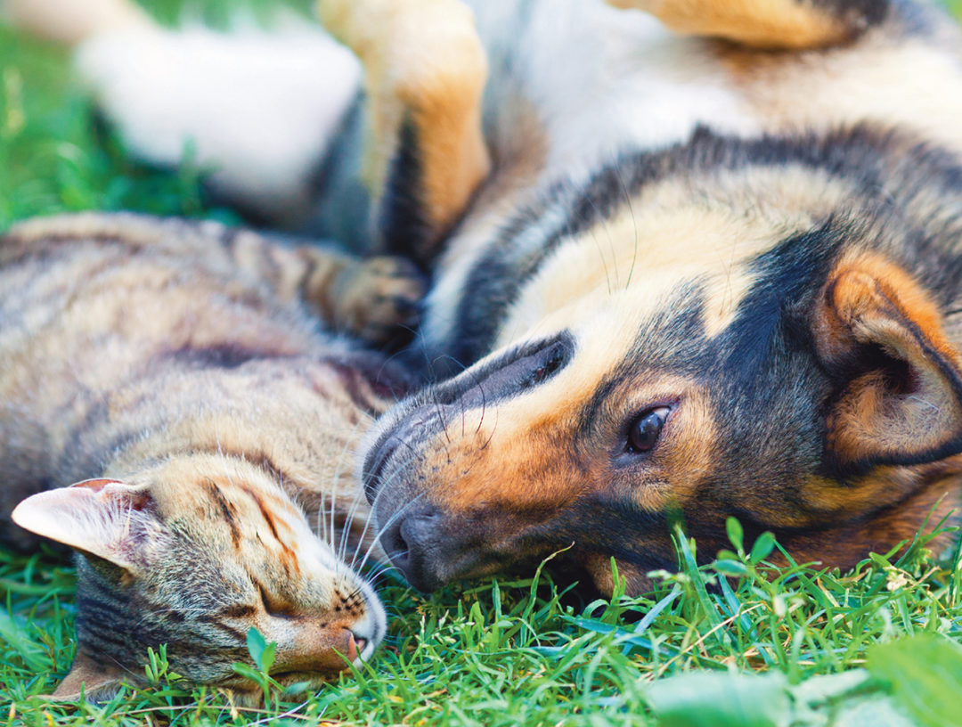Dog and cat in grass
