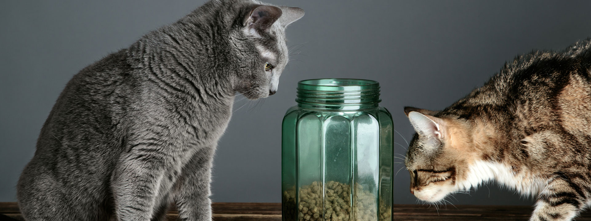 Two cats looking at pet food