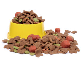 dog food in yellow bowl