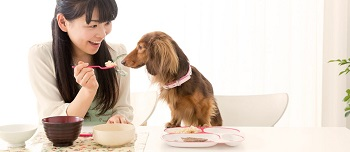 Chinese style pet food trends